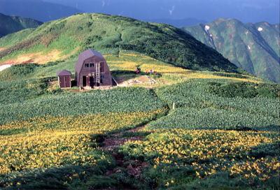 杁差岳 山頂避難小屋とニッコウキスゲ