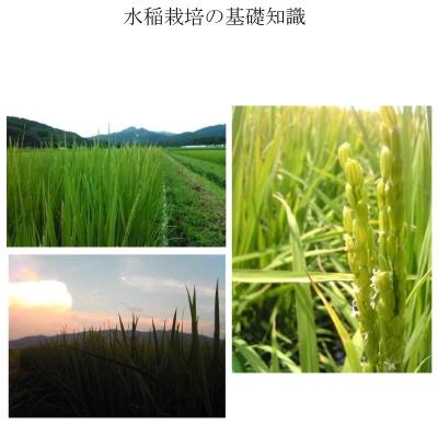 水稲栽培の基礎知識表紙