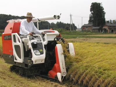 稲刈りのようす